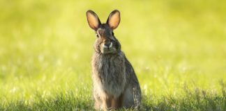 Photo of bunny rabbit